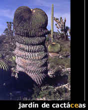 fot_cactus